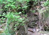 Láká z děr i obyvatele lesa.